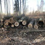 Baumfällarbeiten um den Karlsberg